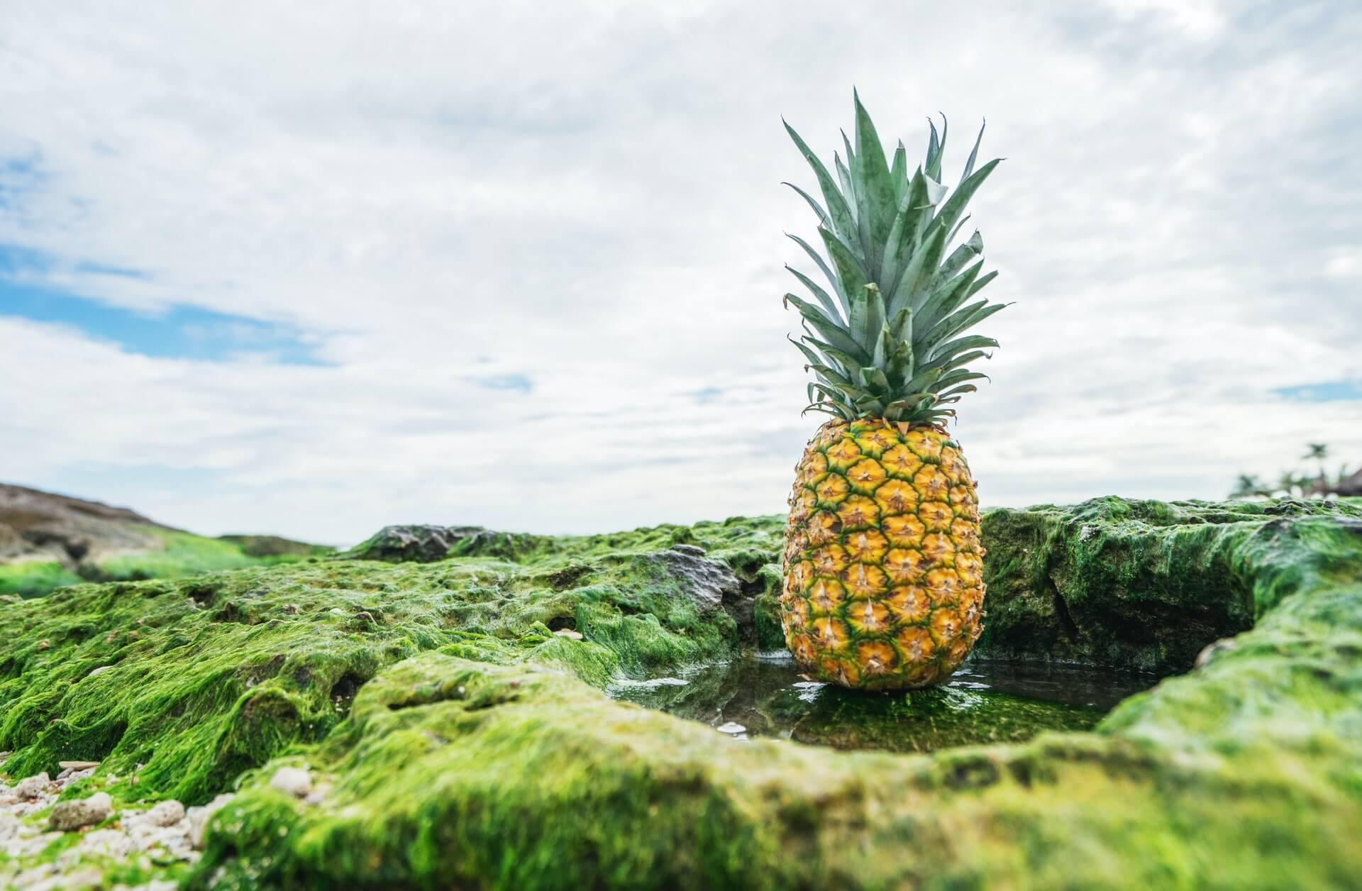 Fruity Cannabis Strains in Canada
