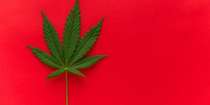 Top Cannabis Strains of All Time