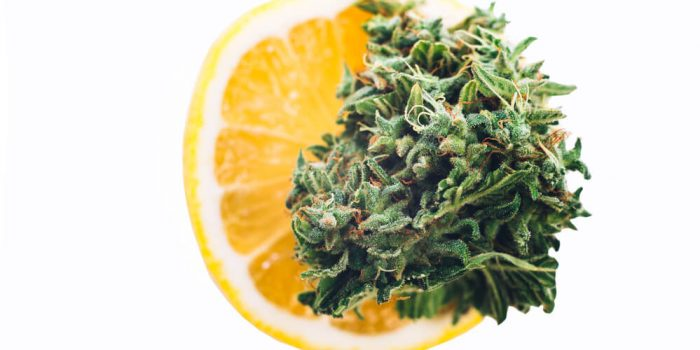 Best Lemon Weed Strains